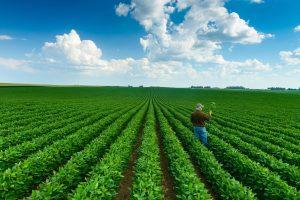Sustainable soya